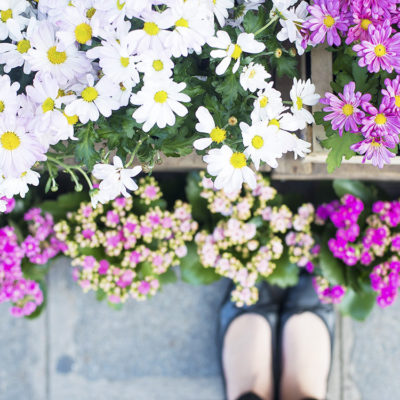 Parisian Blooms